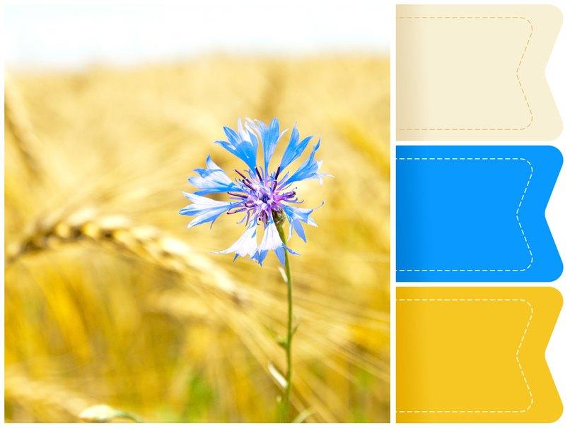 Kornblumenblaue Akzente auf goldenem Hintergrund. Eine edle Farbkombination für die Hochzeit