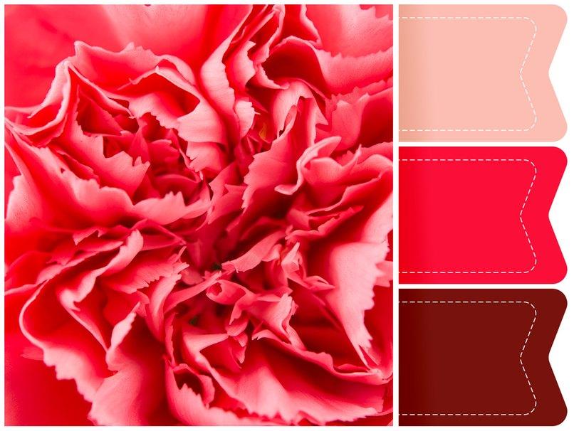 Rote Nelken überzeugen durch die knalligen Farben