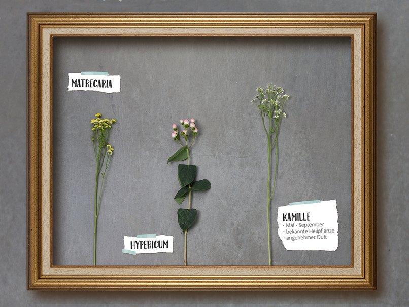 Matrecaria, Hypericum und Kamille sind ausergewöhnlich aber total im Trend
