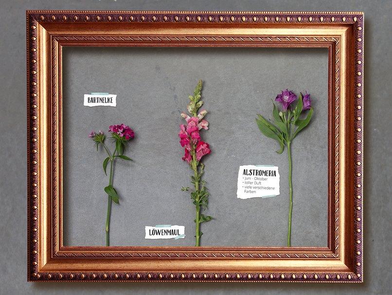 Typische Sommerblumen sind Löwenmaul, Bartnelke und Alstromeria