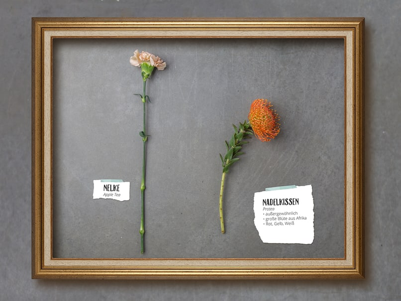 Ein wahrer Hingucker sind Protea bzw. Nadelkissen im Brautstrauß